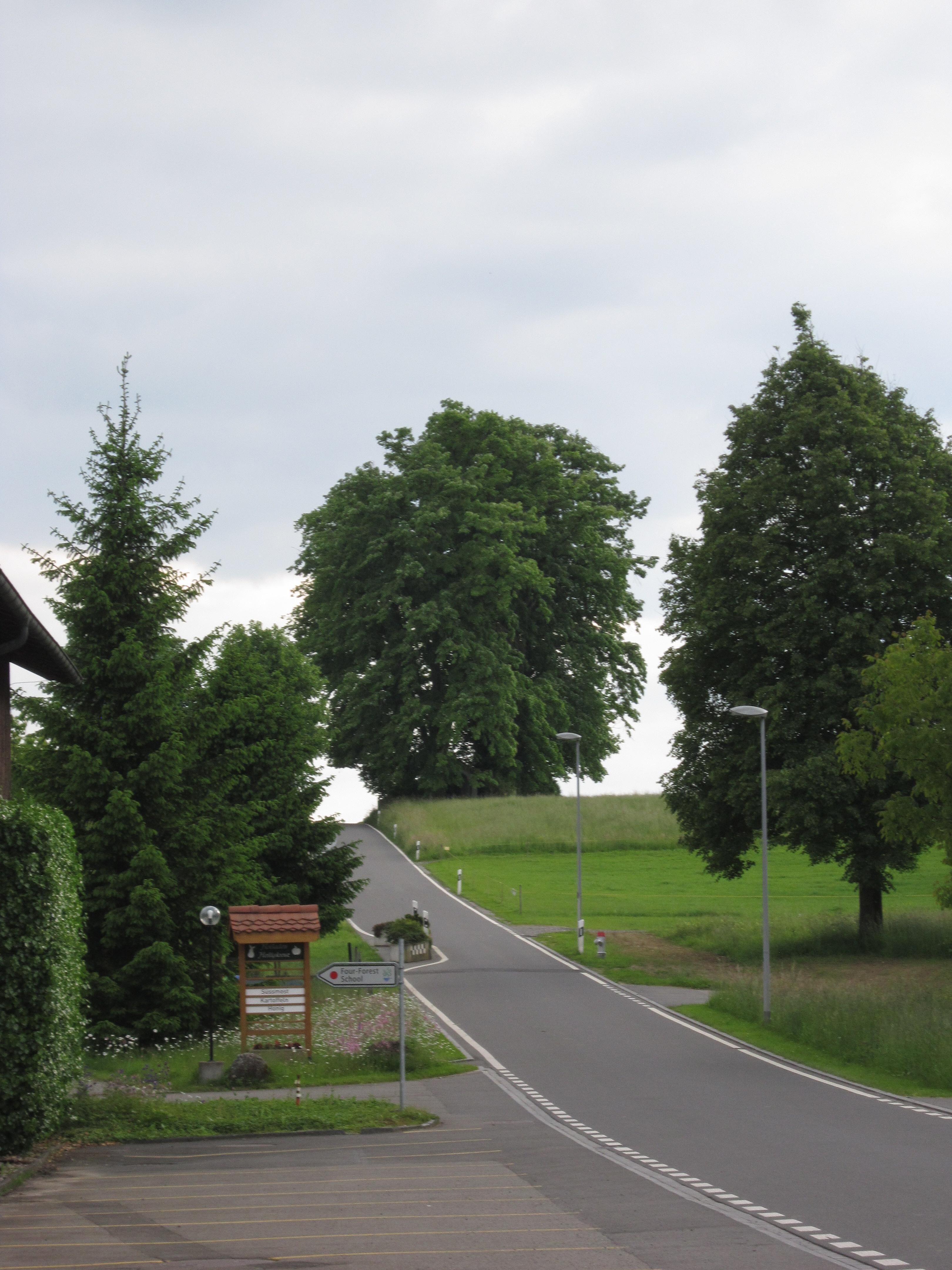 Verschiedene Bäume an einer Strasse