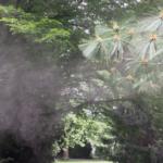 Lärchenpollen im Wind